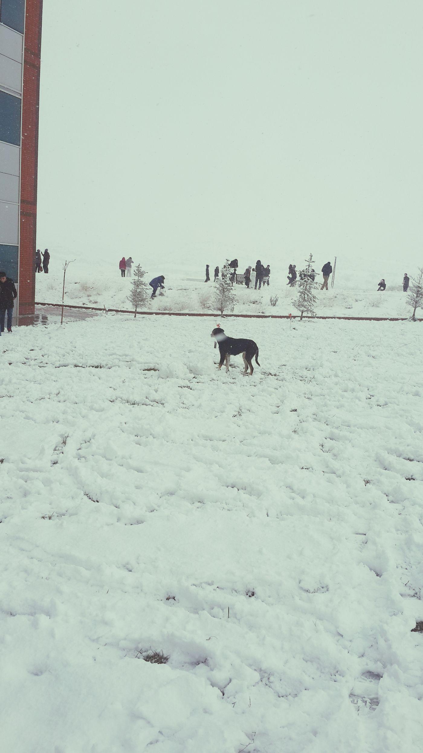 Snow ❄ Kardanadam.. o köpek bizim kardanadamımızı yıktı önünde yatıyor ?