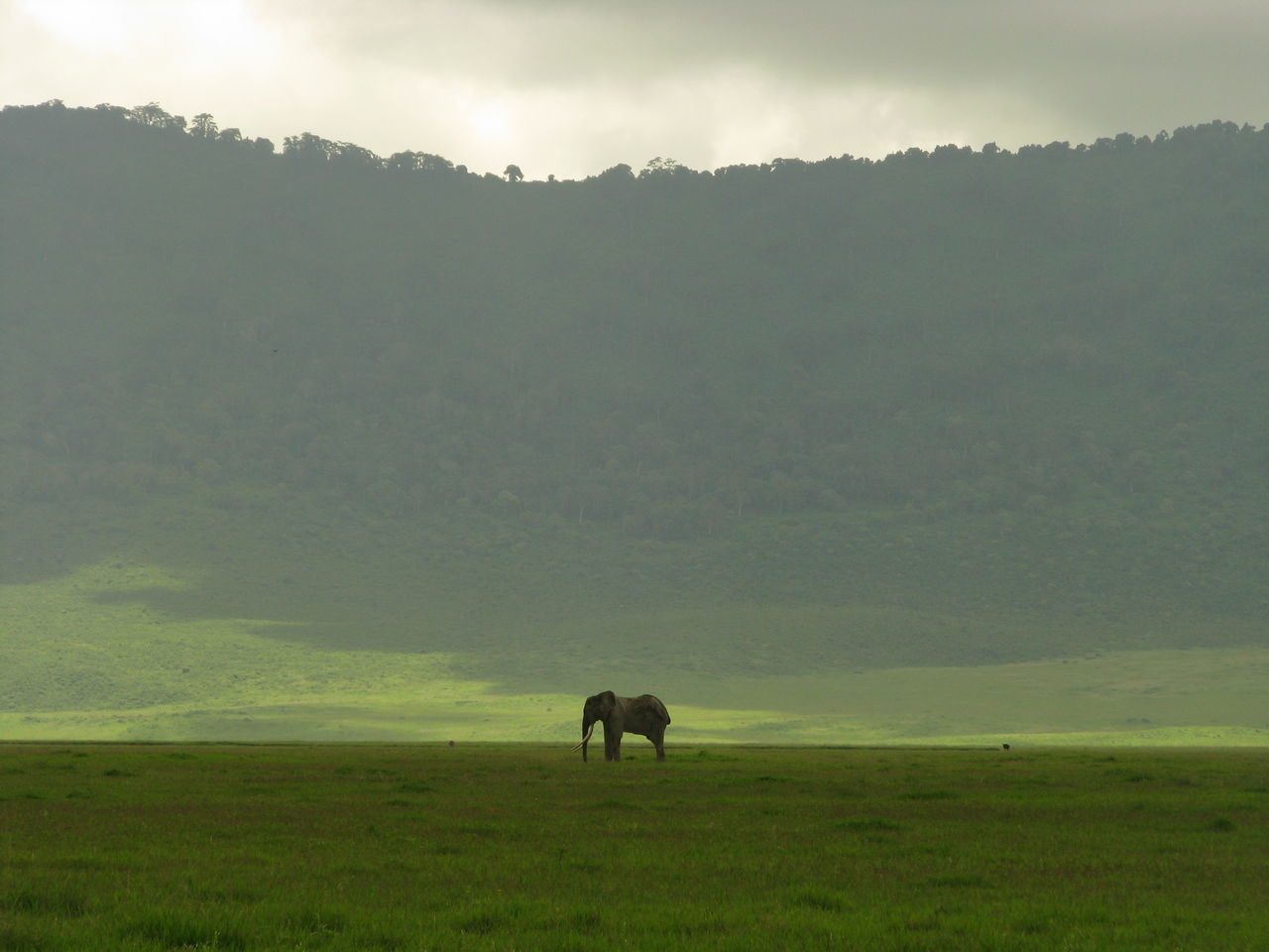 Beautiful stock photos of elefant, landscape, one animal, tranquil scene, grass