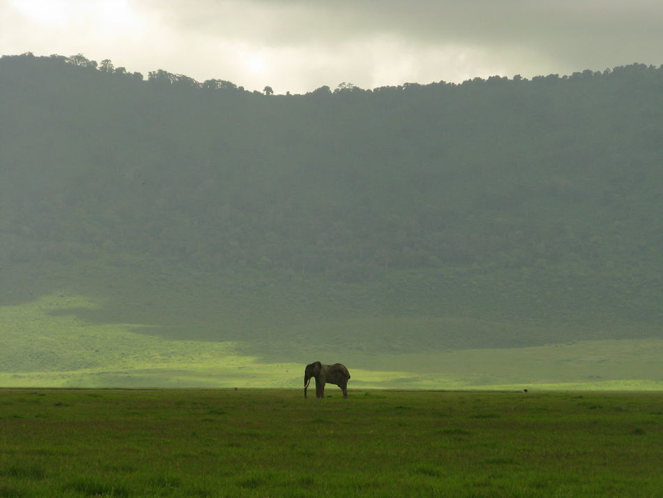 Beautiful stock photos of elefant, landscape, one animal, tranquil scene, grass