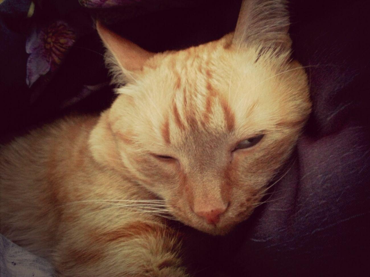 Гошенька уснул^^