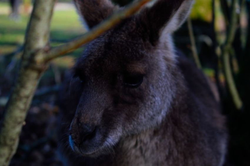 Animal Themes Animals In The Wild Close-up Day Focus On Foreground Mammal Nature No People One Animal Outdoors Tree