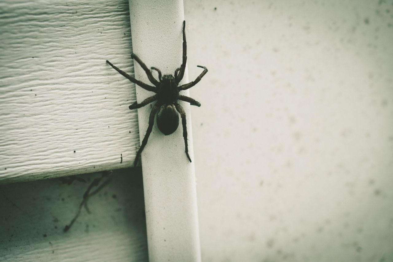 Insect One Animal Animal Themes Animals In The Wild No People Close-up Day Animal Wildlife Indoors  Architecture Spider