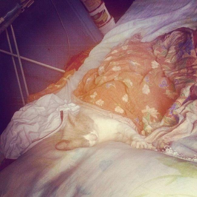 Sleep Cat JackCat SummerForHer Whiska Bed Cute Filter Toaster YesWeCanWakeUpHer What ShutUp Stop Now End ...