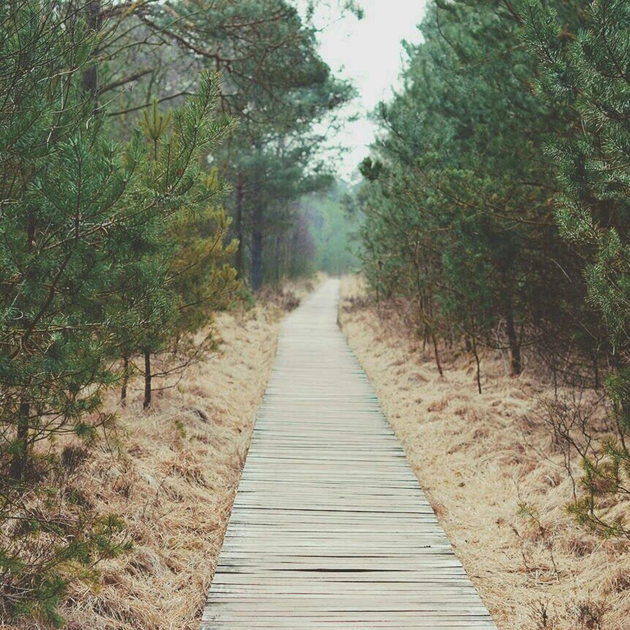 Beautiful stock photos of path, Day, Forest, Green, Landscape