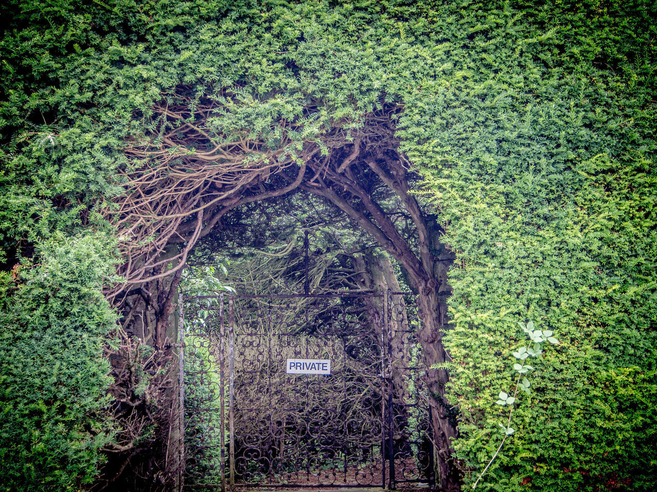 Architecture Beauty In Nature Creeper Plant Day Gate Green Wall Growth Ivy Nature No People Outdoors Plant Private Area Sign Tor Tree