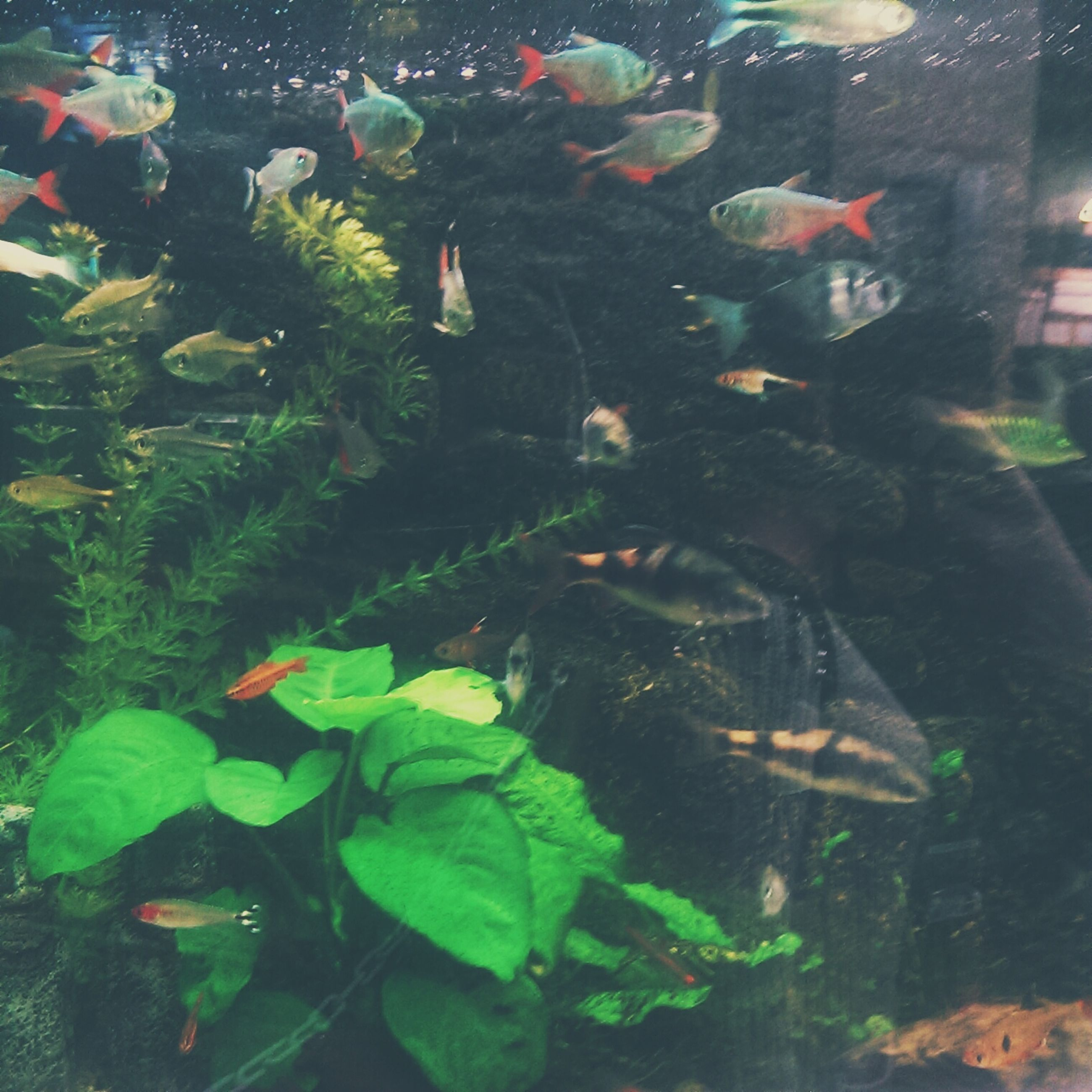 animal themes, animals in the wild, wildlife, swimming, water, fish, bird, underwater, pond, sea life, school of fish, medium group of animals, nature, high angle view, koi carp, lake, beauty in nature, aquarium