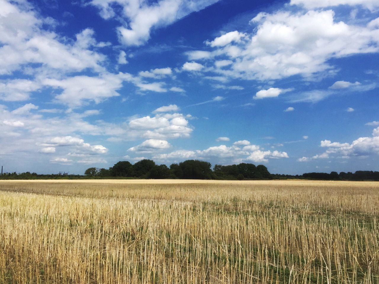 Field Sky Landscape Agriculture Tranquility Nature Cloud - Sky Day Growth Beauty In Nature Outdoors No People Tranquil Scene Scenics Rural Scene Cereal Plant Tree