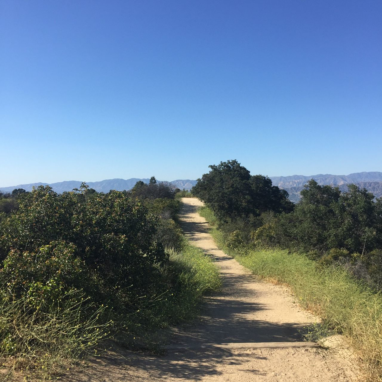It's not a very long trail run but the views were spectacular. Clear Sky Landscape The Way Forward Tranquil Scene Copy Space Nature Tree Tranquility Grass Plant No People Day Scenics Sunlight Beauty In Nature Blue Growth Outdoors Sky (null)Trail Running Trail Running