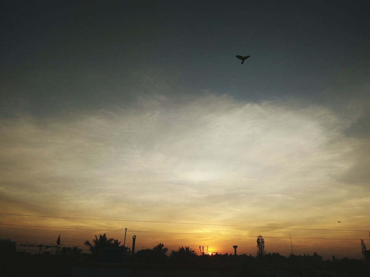 flying, sunset, silhouette, sky, no people, airplane, low angle view, outdoors, nature, bird, tree, day