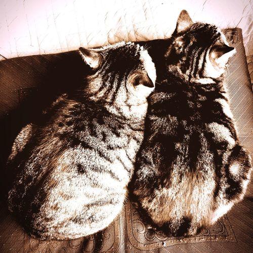 Cats Cat Lovers Catsofinstagram