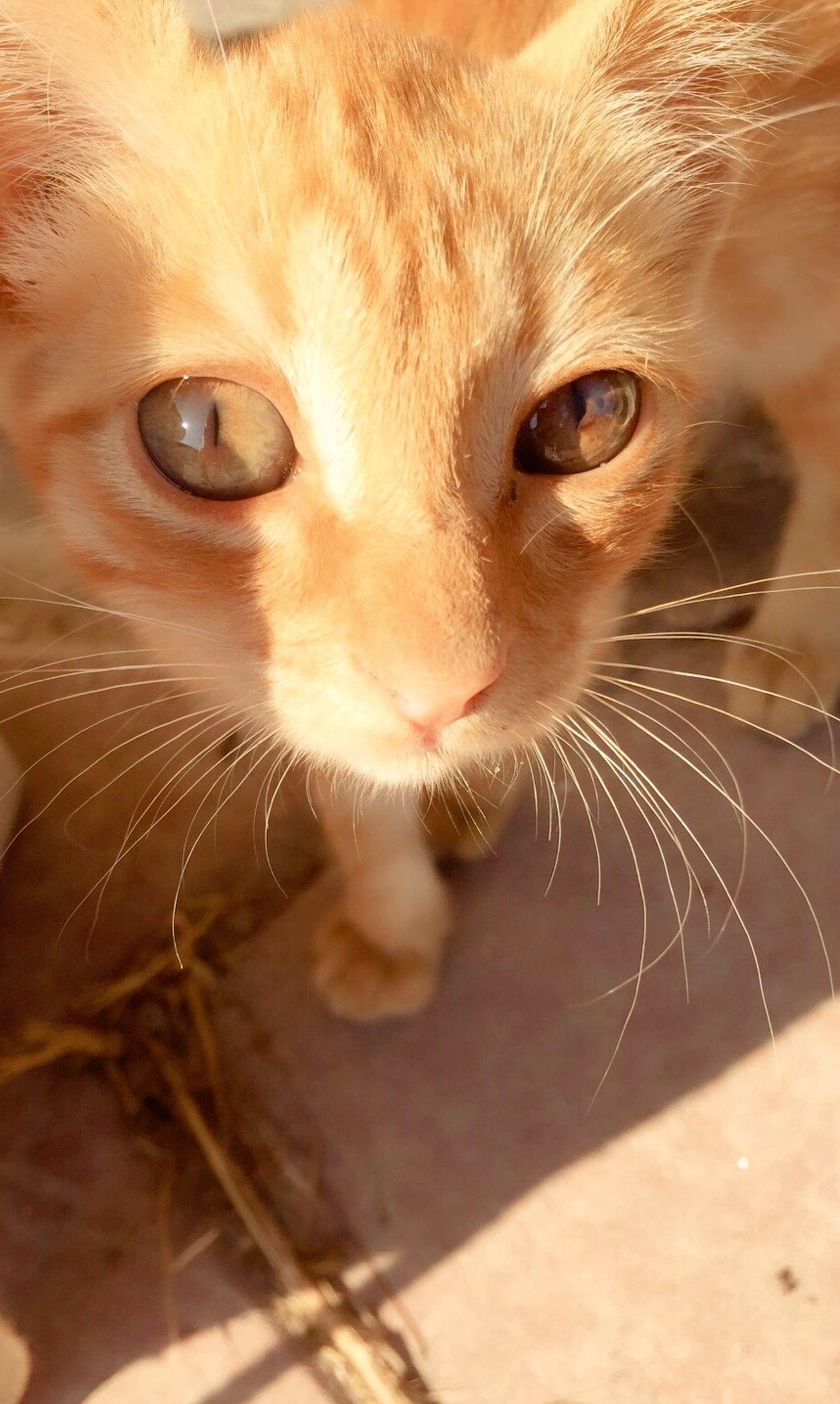 Cat Cat Lovers Cat♡ Catoftheday Cats Catlovers Sunshine Kitty Kitten Taking Photos