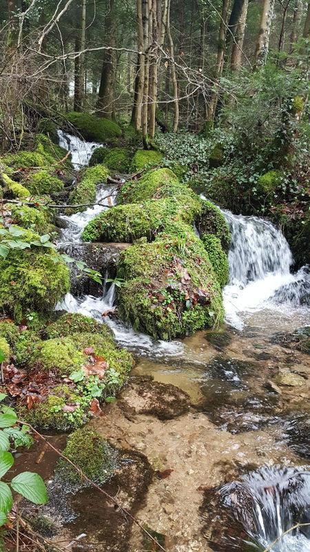 Nature No People Beauty In Nature Water Blackforrest Brook Creek Waterfall