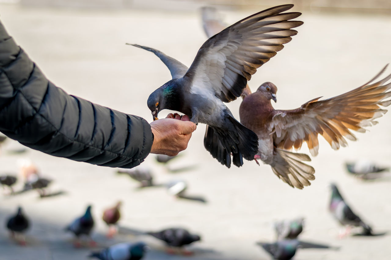 Animal Wildlife Bird Day Dove Fly Human Hand Italy Italy❤️ Natural Outdoors People Wings