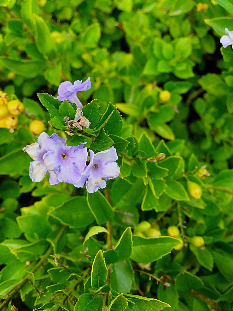 flower, growth, beauty in nature, nature, green color, fragility, petal, freshness, plant, purple, leaf, day, flower head, outdoors, no people, close-up, focus on foreground, blooming