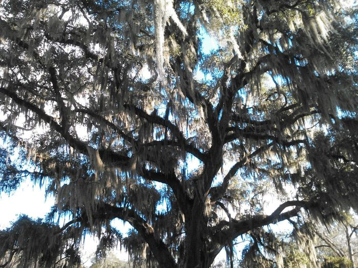 Trees And Sky Nature Photography Natural Beauty Blue Sky Oak Tree