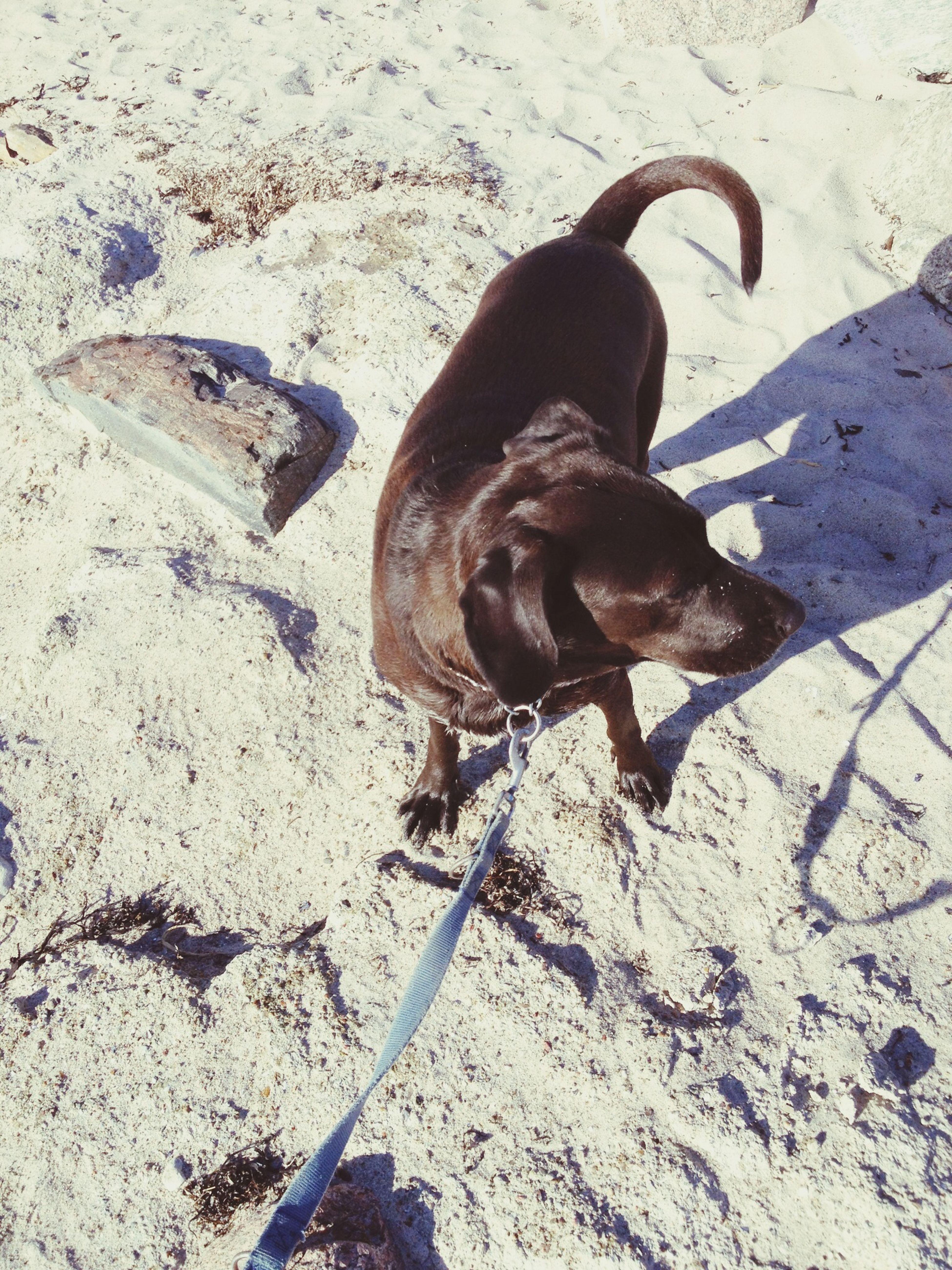 Hundamstrand Hund Dog Strand