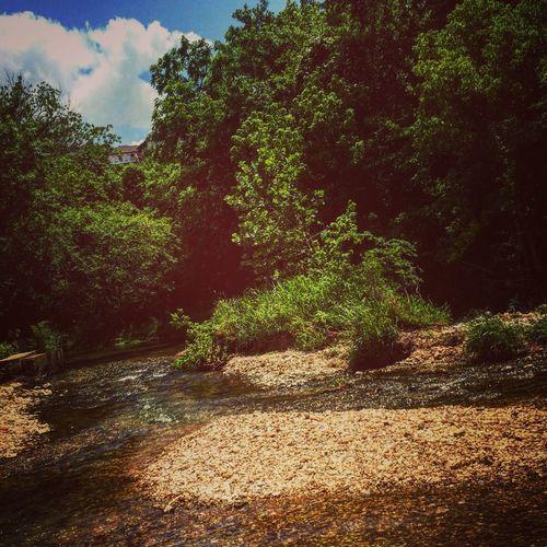 #Blue Hole Nature Bliss Peaceful Arkansas, USA