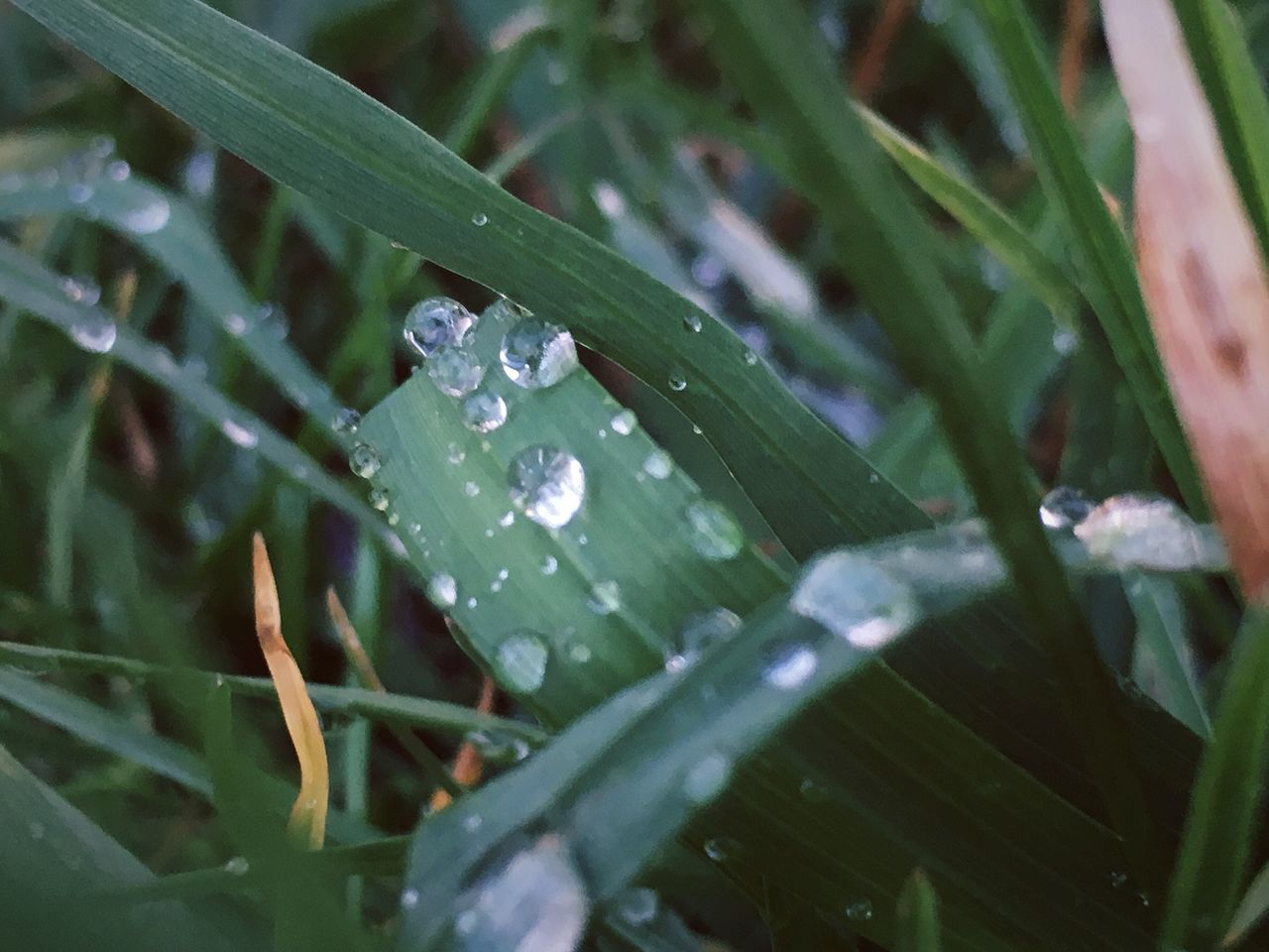 Drop Wet Rain Water Nature RainDrop Weather Leaf Purity Rainy Season Dew Fragility Freshness Plant Green Color No People Beauty In Nature Droplet Close-up Water Drop