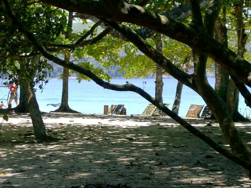 Praia do sono rj Tree Nature Sea Water Scenics Beach Sky Outdoors Beauty In Nature Tranquility Day No People Tranquil Scene Growth Tree Trunk Sand Branch Vacations Hammock