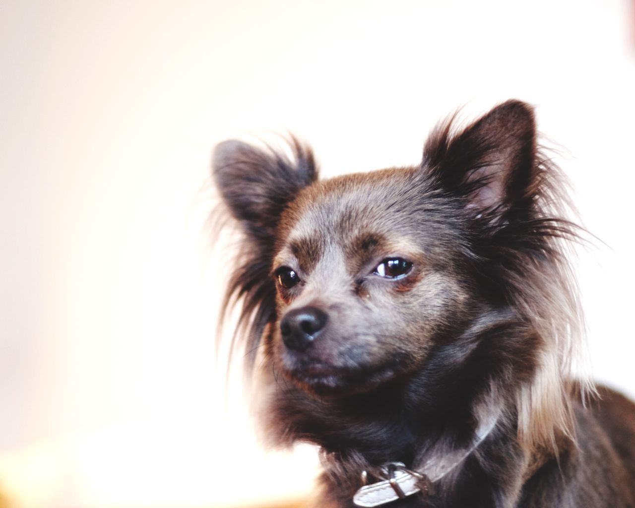 Doubtful Sceptic Sceptical Suspicious Dog Distrust