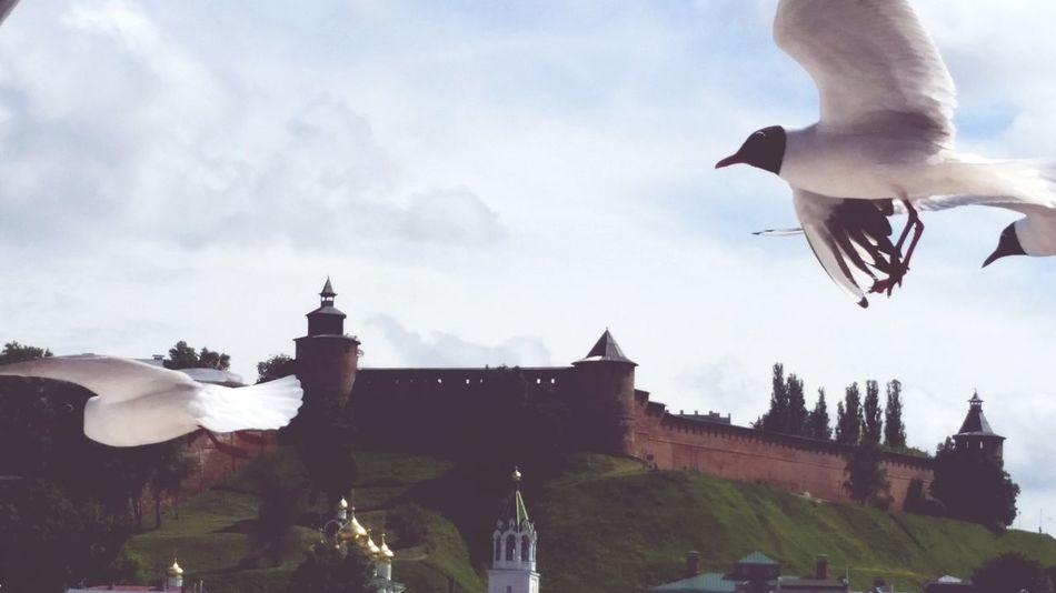 Walk Gull Gulls Kremlin Kremlin Walls Nice Day Nice Atmosphere Beatuful Beautiful Day Taking Photos PhotoofthedayBirds Birds Of EyeEm  City Image Photography Чайки нижний новгород Кремль прогулки птицы катер город Жизнь красота