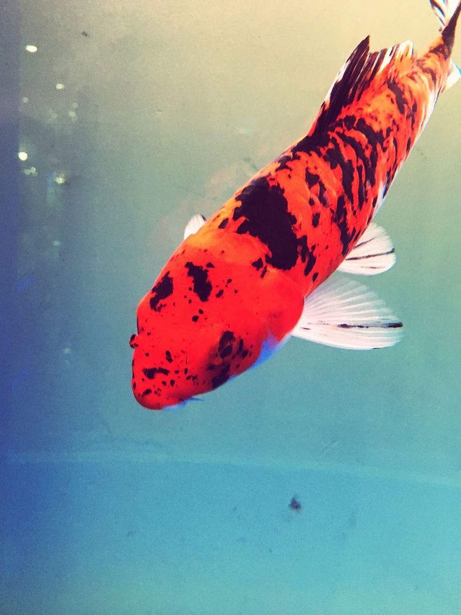 鱼缸里的鱼 First Eyeem Photo