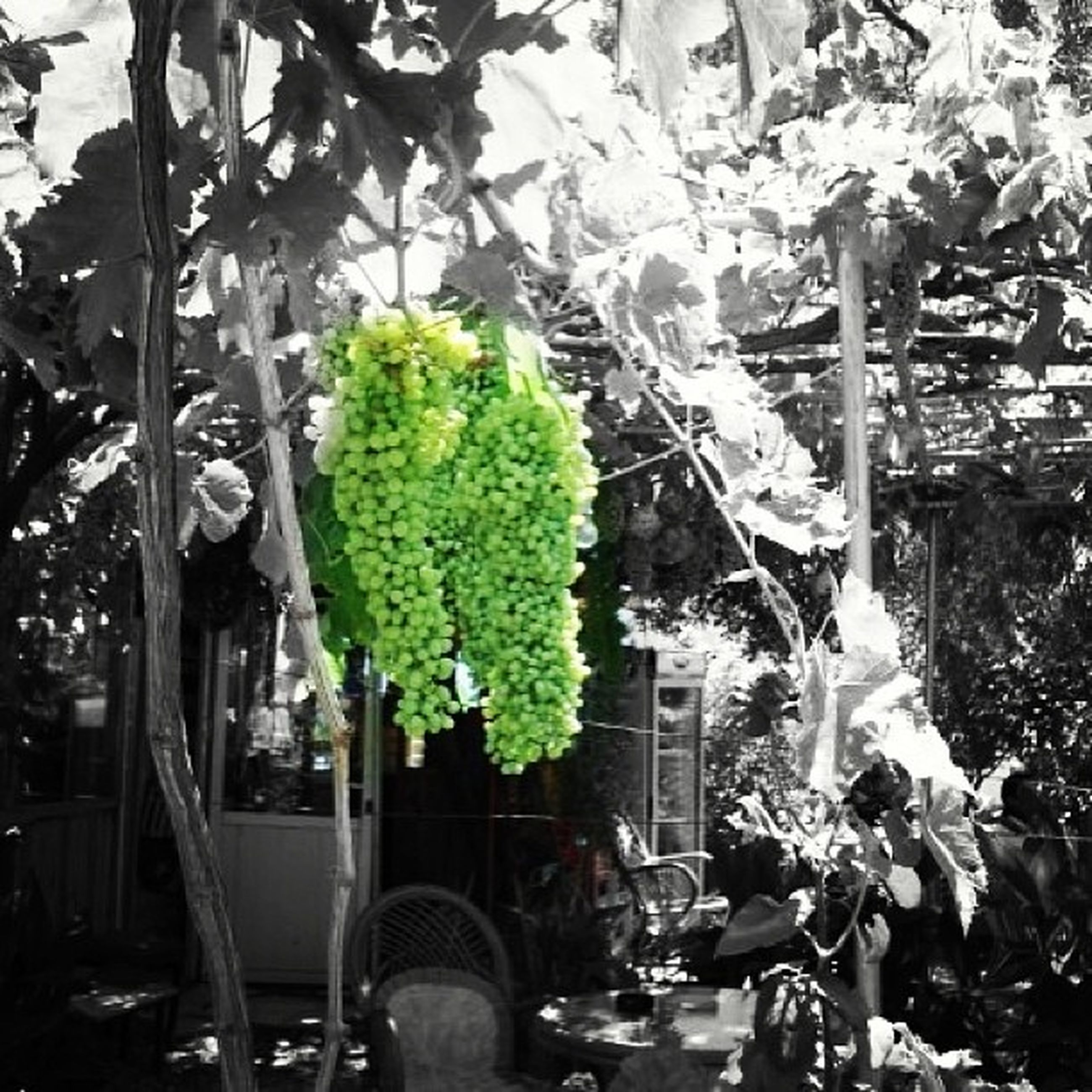 tree, growth, men, leaf, potted plant, person, lifestyles, plant, green color, leisure activity, outdoors, day, nature, large group of people, sunlight, incidental people, chair, street, abundance