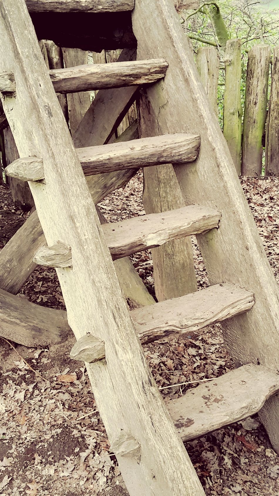 No People Wood - Material Outdoors Day Stairs Stair Treppe Leiter Holz Holztreppe Holzleiter