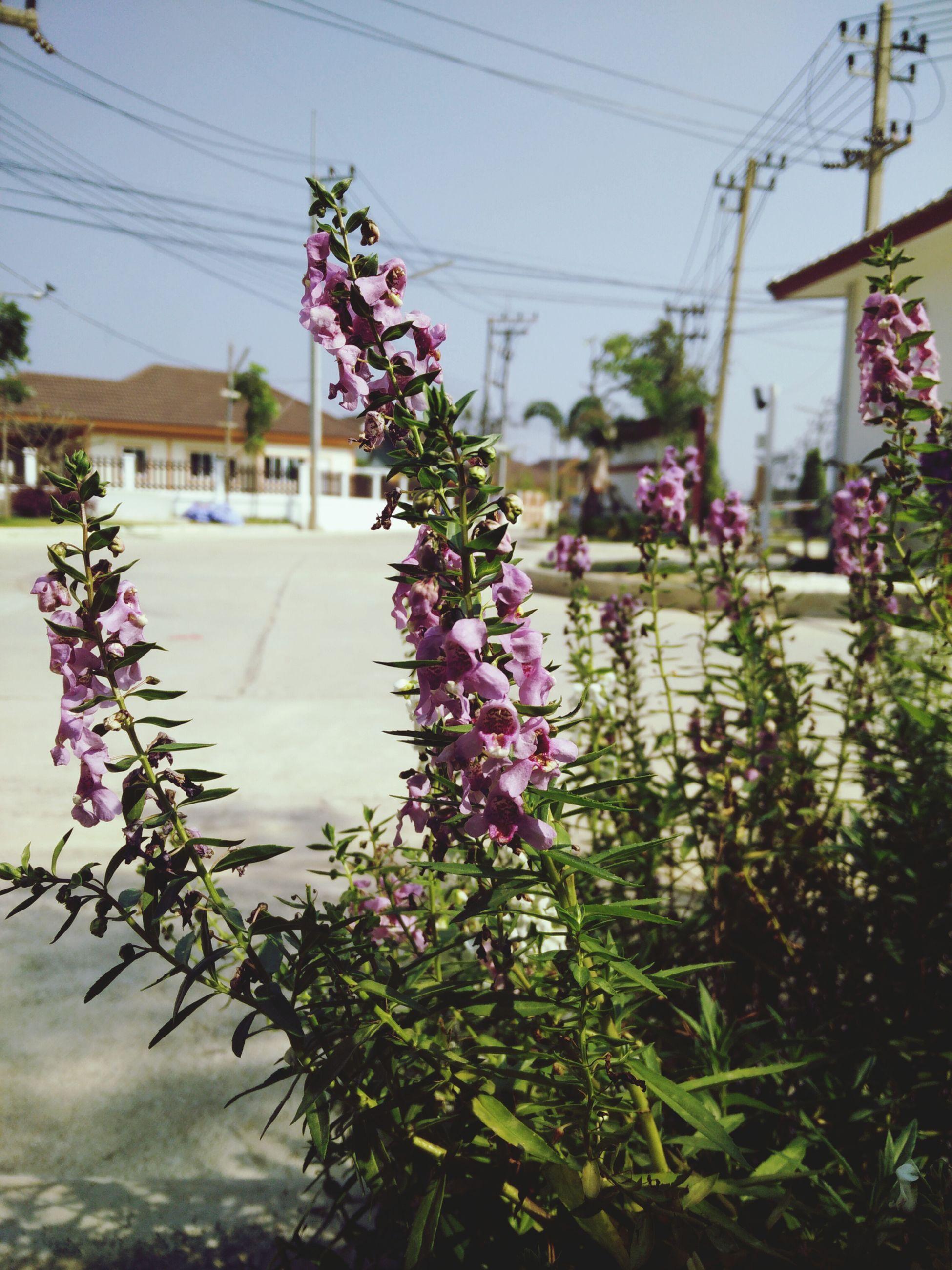 ดอกไม้ร่วงโรย เปลี่ยนผันตามฤดู First Eyeem Photo
