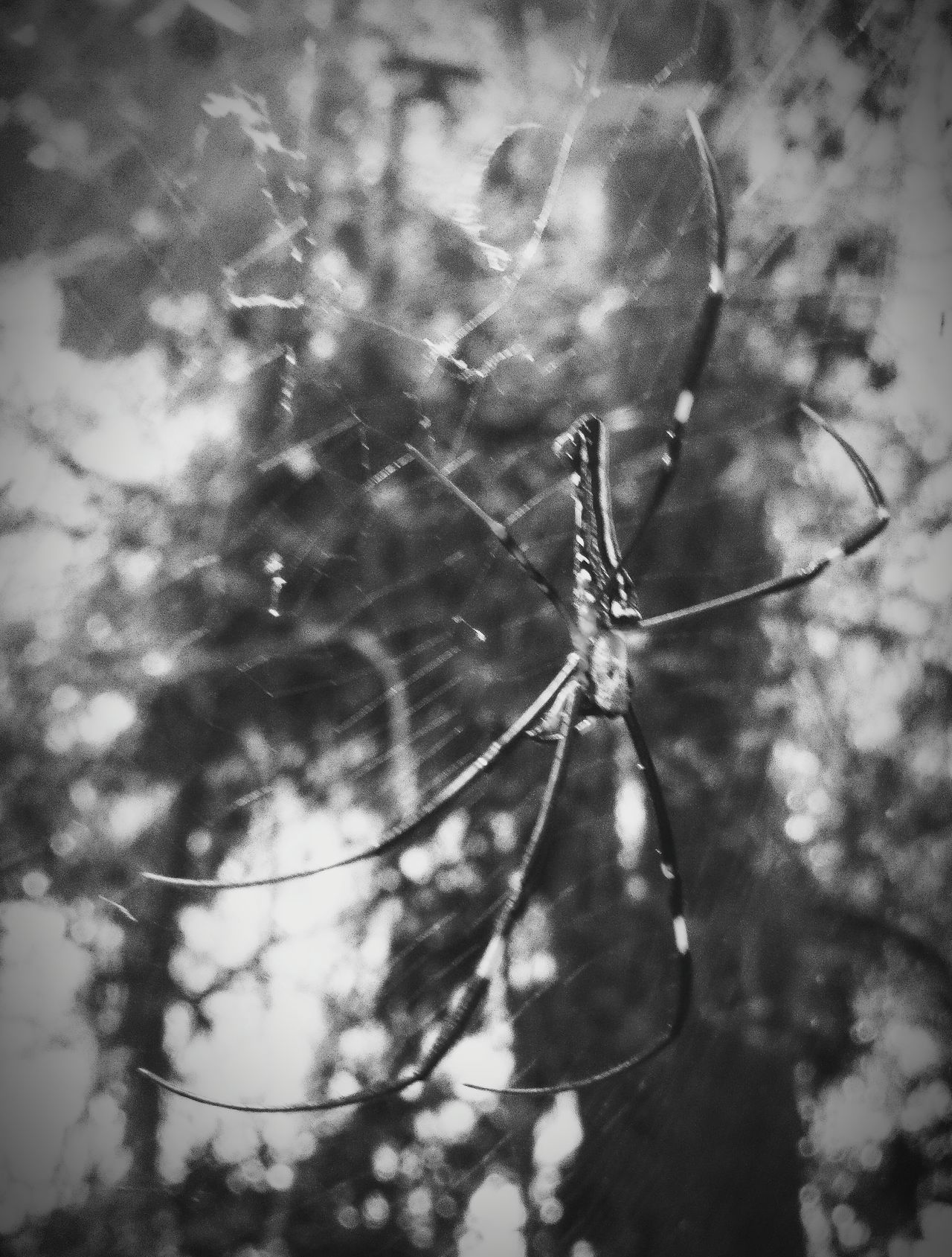 As big as my entire hand 😨 Huge Spider Jungle Trekking Khaoyainationalpark Thailand Arachnid Big Spider In The Jungle Spider Bnw Nature Jungle Spider Arachnid Photography Spider Photography Scary Spider Giant Spider Arachnophobia Watch Out! Dont Touch Don't Touch Don't Get Too Close. Khaoyai Khao Yai EyeEm Thailand Thailandtravel Fujifilm Finepix Xp60
