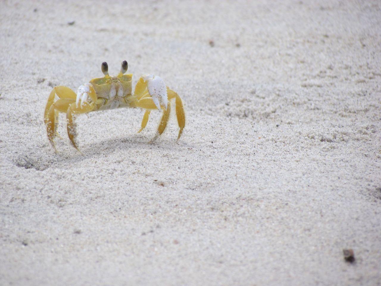 Beautiful stock photos of brazil, Animal Themes, Animal Wildlife, Animals In The Wild, Beach