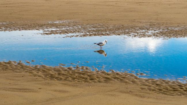 Animals In The Wild Beach Bird Meer Move One Animal Outdoors Sand Spiegelung Strand Water
