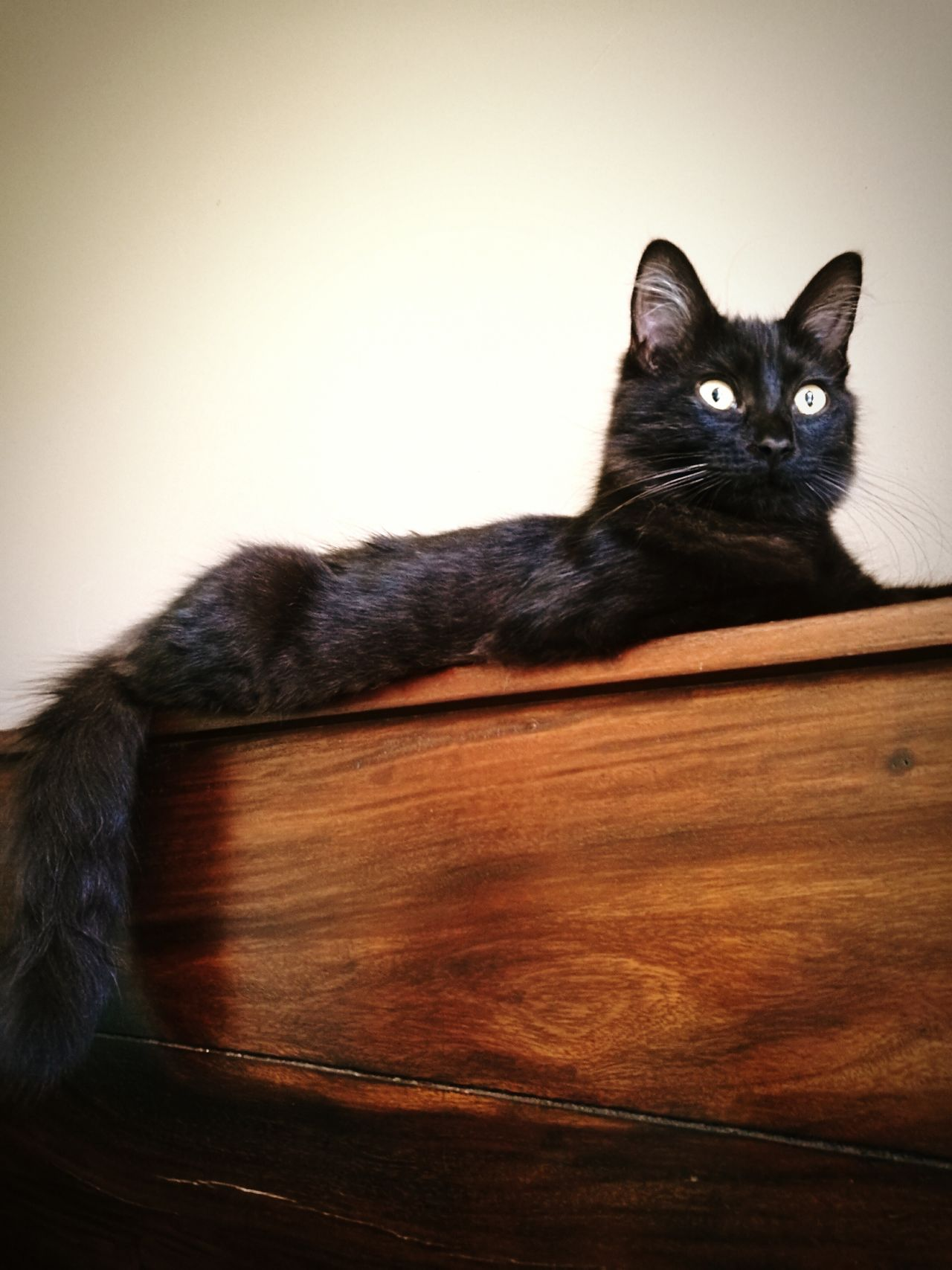 The Kitten First Eyeem Photo Kitten Kittens Kitty Love Black Cat Black Cats Are Beautiful Bedroom View  Long Tail