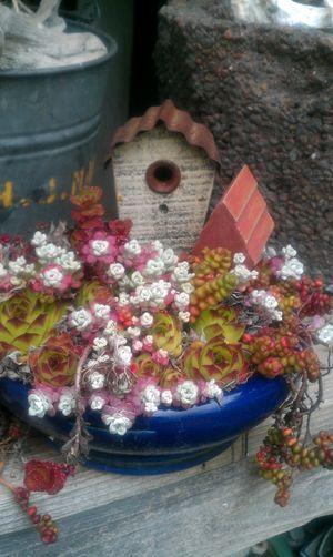 Abundance Arrangement Birdhouse Creativity Freshness Multi Colored No People Plantscape Preparation  Retail  Succulents