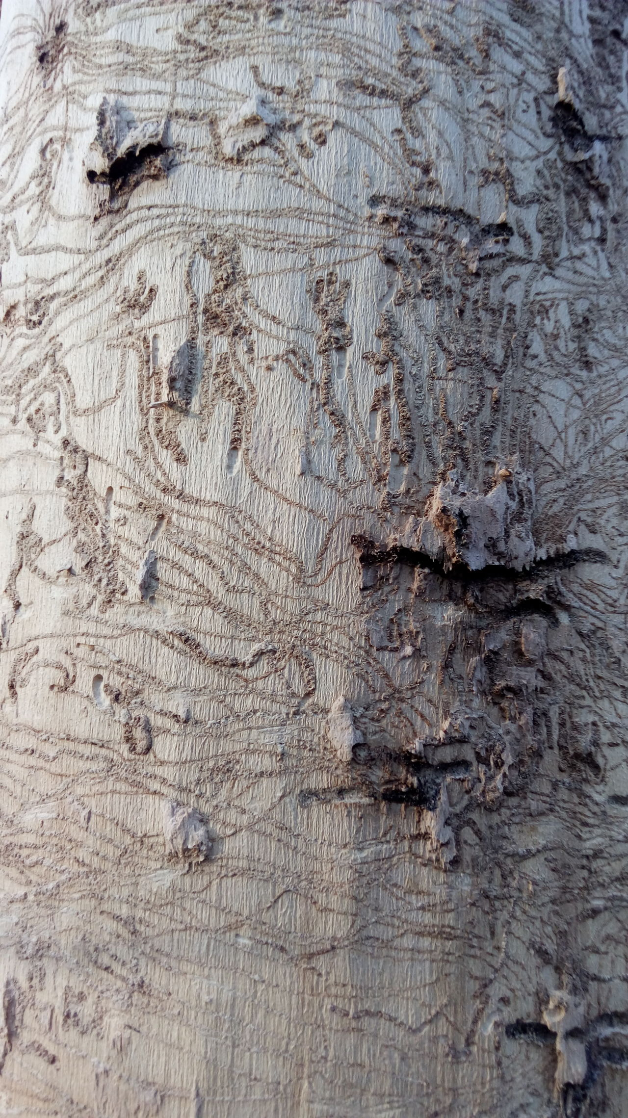 Pattern Outdoors Nature Tree Textured  Pattern, Texture, Shape And Form Patterns In Nature OriginalPhoto Originalpicture Nature_ Collection  Tree Trunk Bore Backgrounds Full Frame No People Close-up Textured  Nature Day EyeAmNewHere EyeEmNewHere