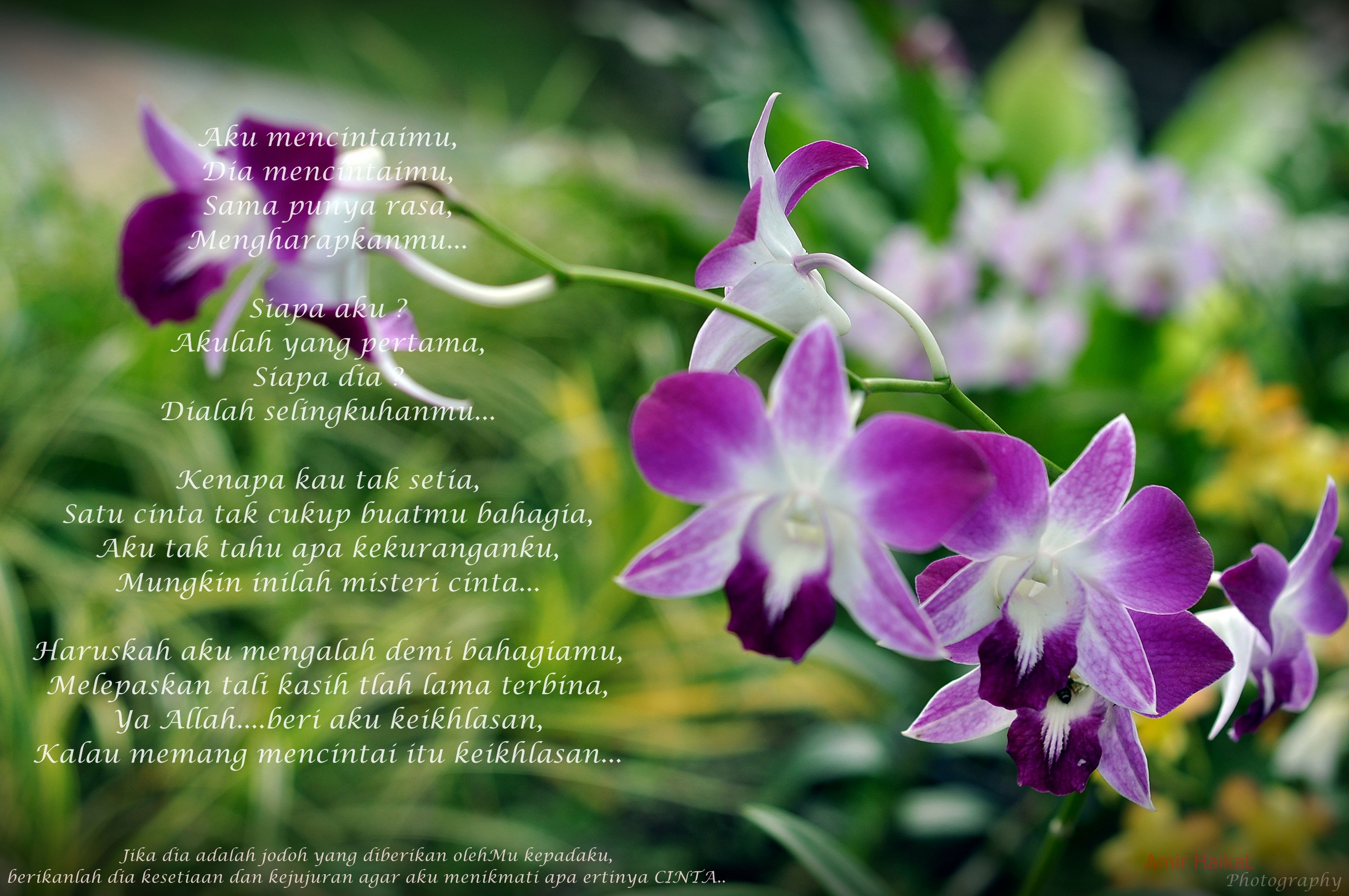 flower, purple, fragility, freshness, focus on foreground, close-up, growth, beauty in nature, petal, plant, nature, pink color, stem, animals in the wild, flower head, animal themes, blooming, outdoors, day, no people