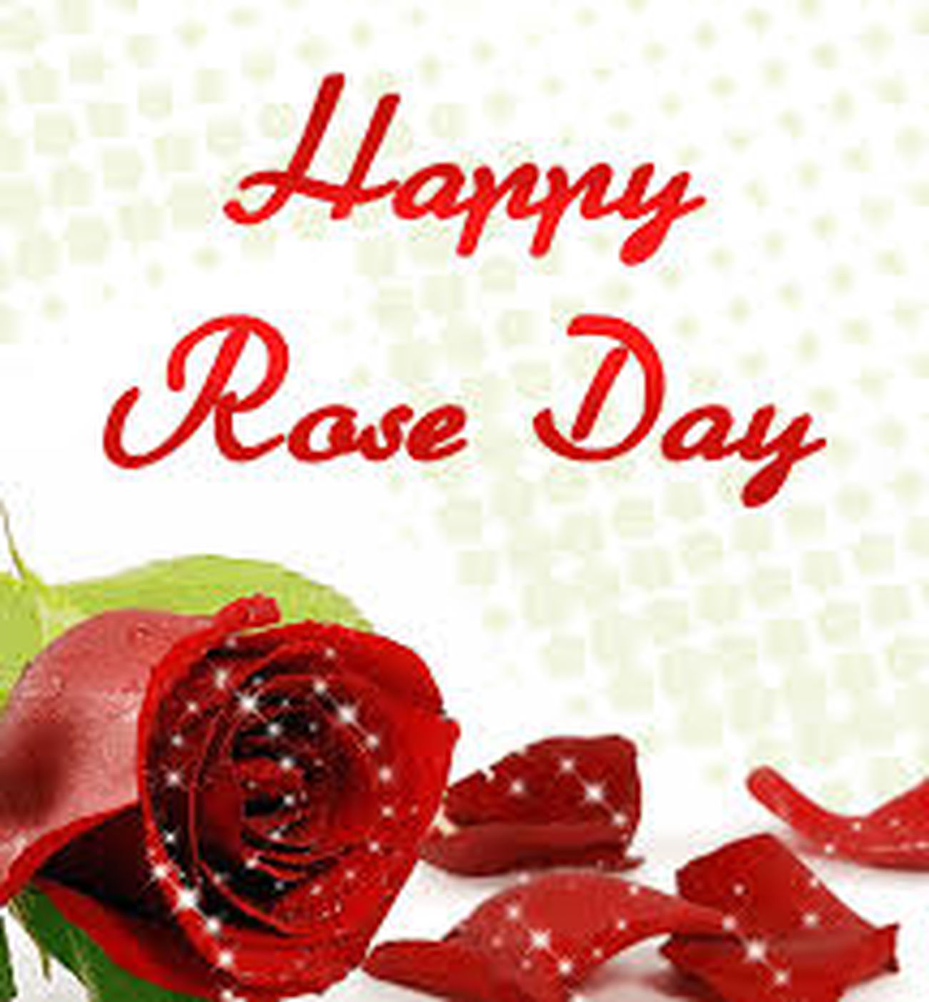 Happy Roseday Taking Photos Enjoying Life Hello World
