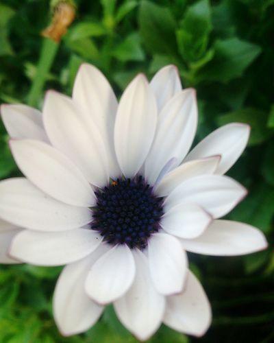 Cute Flower First Eyeem Photo
