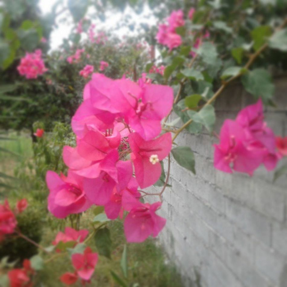 و گل های کاغذی میانه شعرم از بی قراری پر پر شدند ... Iran Namakabroud