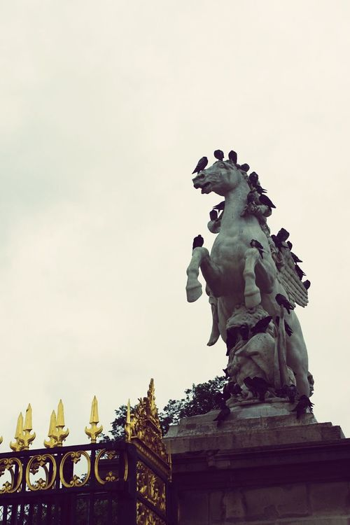 Architecture & Statues Hourse Birds Pegions Growing Better Paris Frence