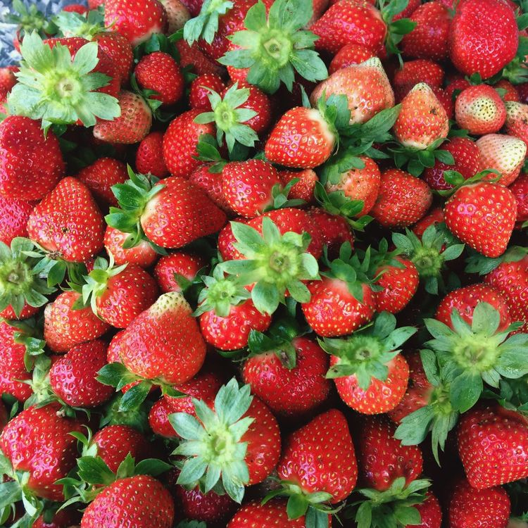 Strawberries! 🍓. Strawberries Strawberry Dessert Fruits Latrinidad Benguet Nothernluzon Philippines Strawberrypicking Red Pink Photography