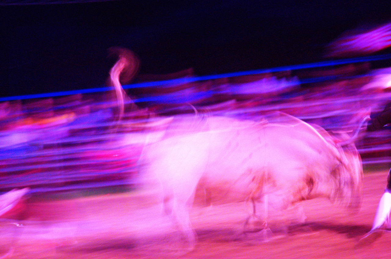 blurred motion, motion, speed, long exposure, light trail, night, outdoors, no people, domestic animals, animal themes, mammal