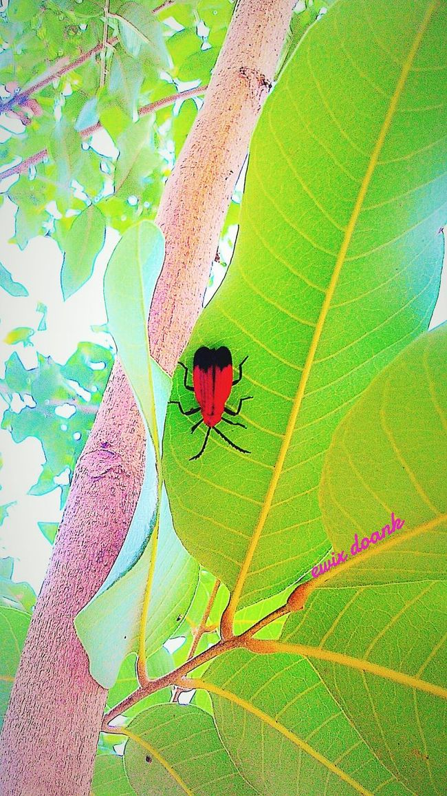 Animals ,insect, Animalphotography ,,tree , Nature_collection