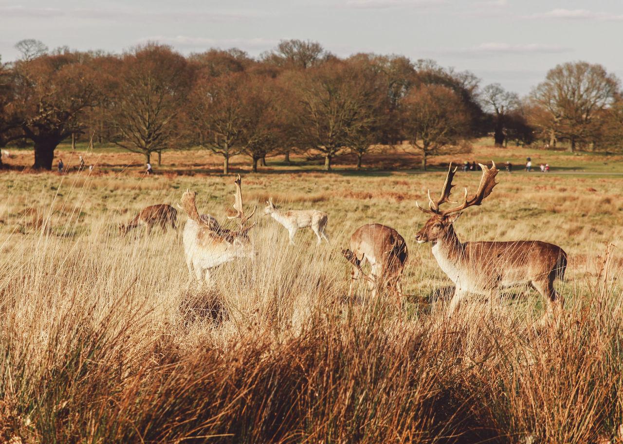 Beautiful stock photos of hirsch, Animal Themes, Animal Wildlife, Animals In The Wild, Bare Tree