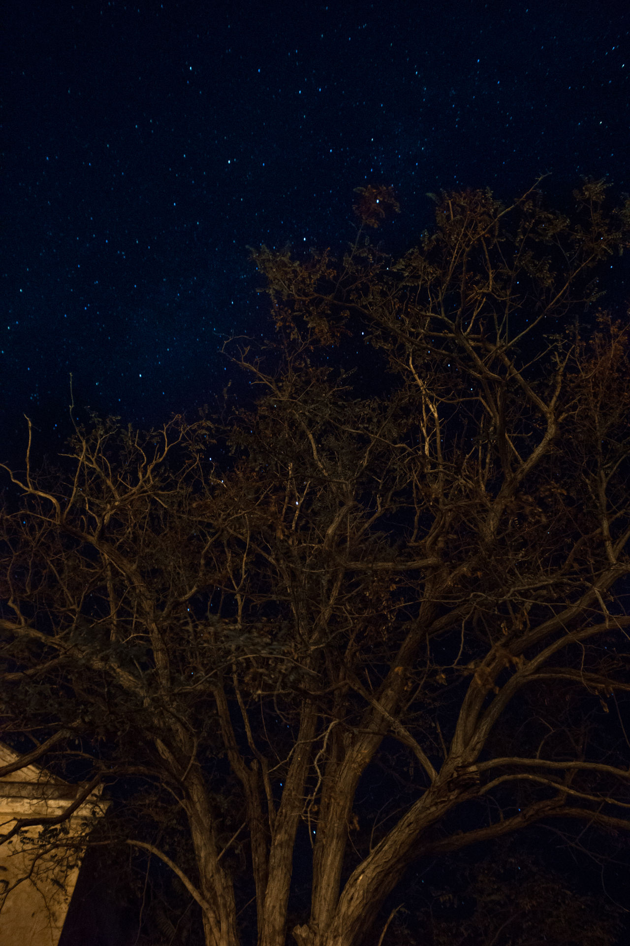 Astrology Sign Astronomy Beauty In Nature Constellation Galaxy Growth Idyllic Low Angle View Nature Night No People Outdoors Scenics Science Sky Space And Astronomy Star - Space Star Field Tranquility Tree Vertical