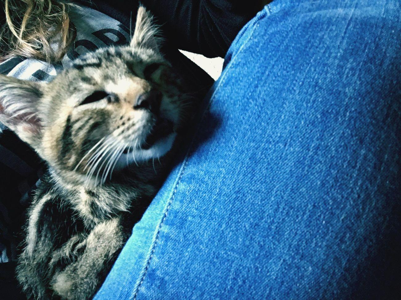 Babycat ❤️❤️ Animals In The Wild 🙊🙊