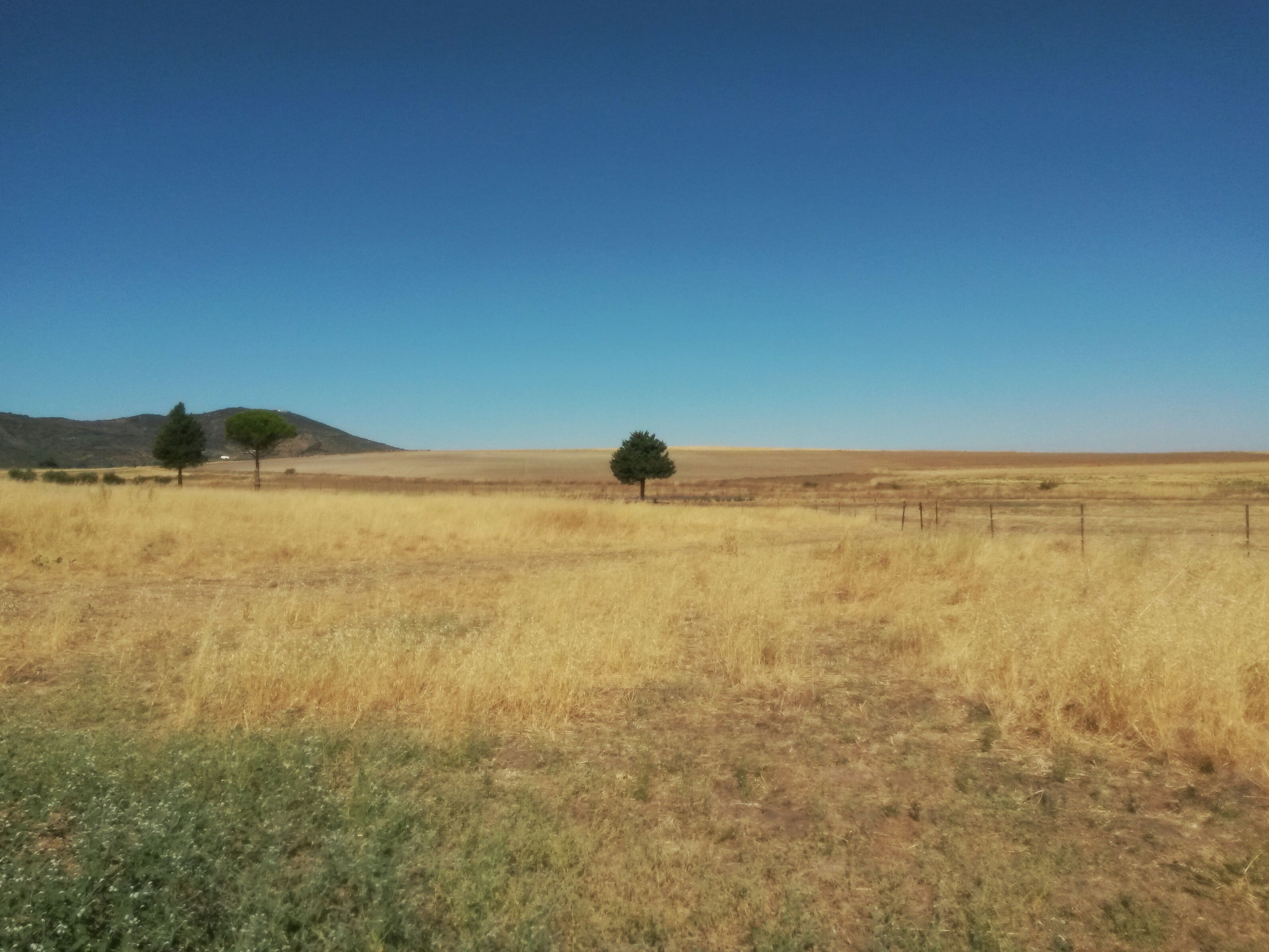 clear sky, copy space, landscape, blue, field, tranquility, tranquil scene, horizon over land, scenics, rural scene, agriculture, nature, outdoors, day, beauty in nature, farm, remote, no people, non-urban scene, solitude, distant, agricultural