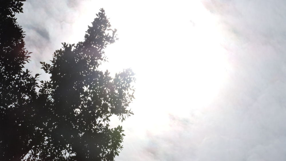 Beauty In Nature Close-up Cloud - Sky Cloudy Sky Day Growth Leaf Fantasy Leafs 🍃 Low Angle View Nature No People Outdoors Silhouette Sky Sun Sun Behind Clouds Sun Behind The Tree Sunbeam Sunlight Sunlight Sunlight And Shadow Tranquility Tree