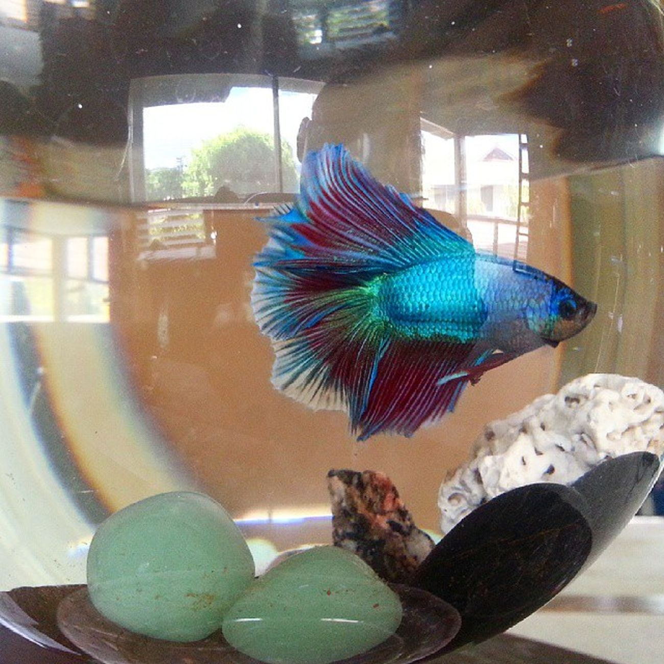 Our newest addition - Lithium Beta Fish @nimbus_photography
