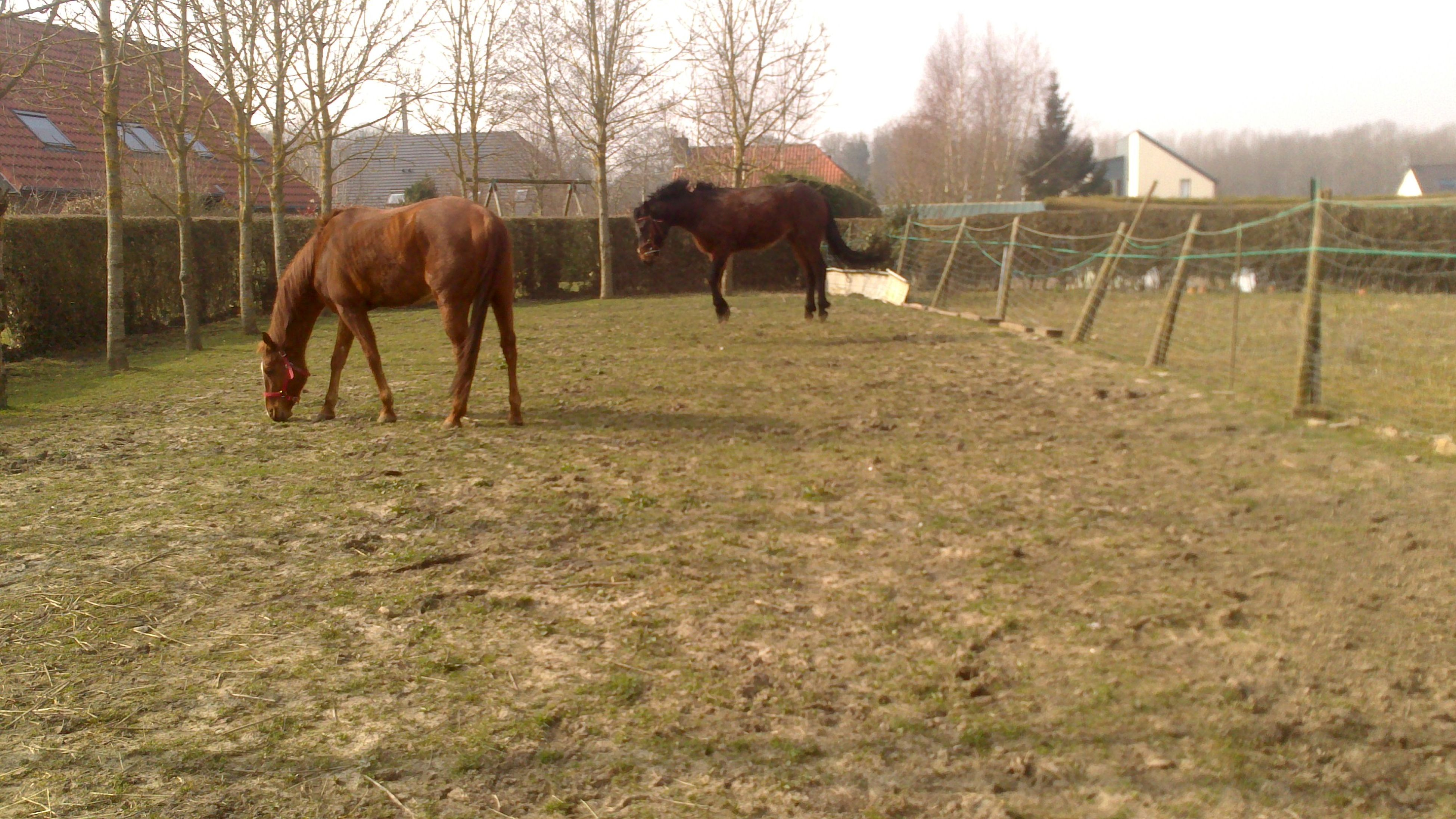 animal themes, domestic animals, mammal, livestock, horse, one animal, field, built structure, grass, fence, building exterior, working animal, architecture, herbivorous, tree, two animals, grazing, standing, full length, day